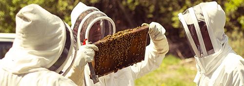 Farms at Work Beekeeping Mentorship Program