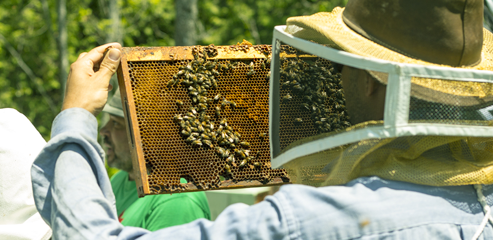 Farms at Work Beekeeping Mentorship Program - Checking Hives
