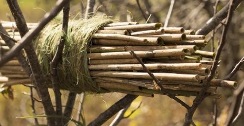 Nesting habitat - cavity dwellers